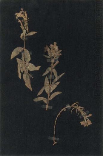 Paul Klee-232572