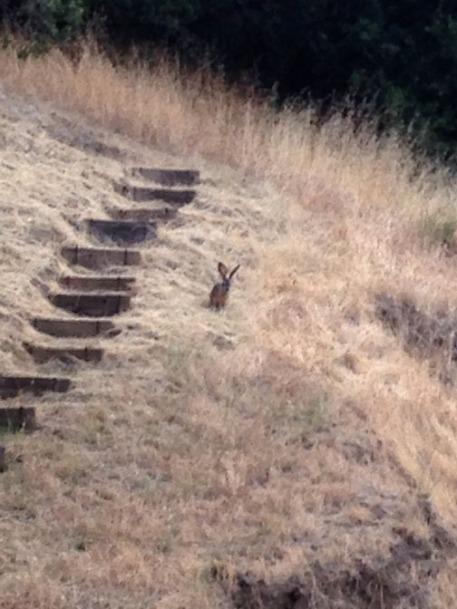 Rabbit IMG_6030