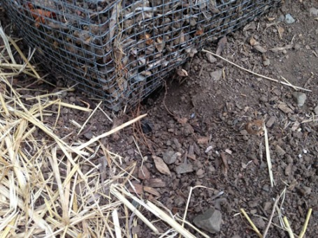 Digging IMG_6460